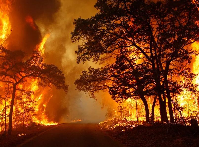 penyebab kebakaran hutan