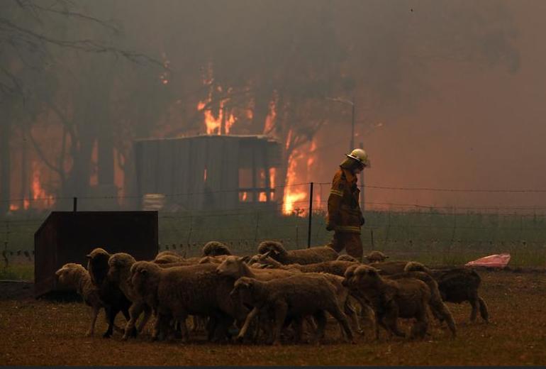 dampak kebakaran hutan