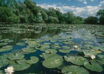ekosistem air tawar