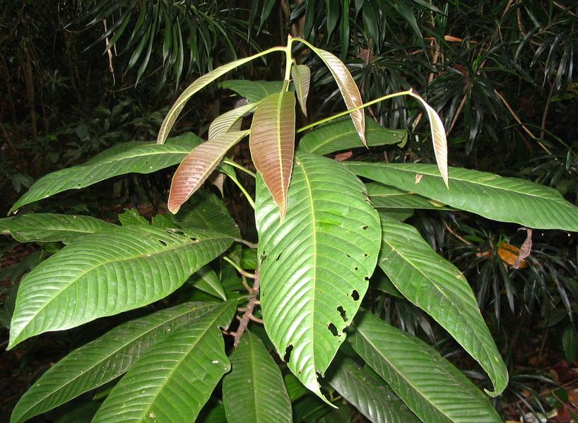 tanaman langka