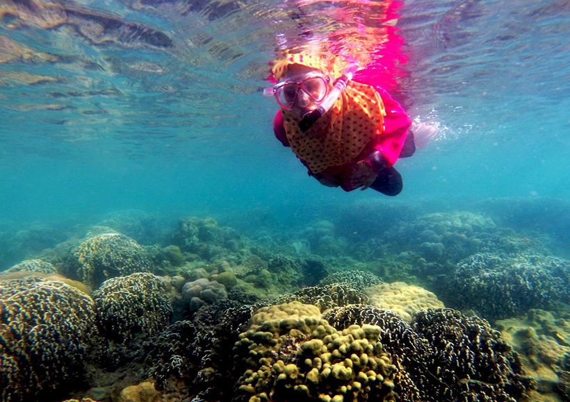 Manfaat terumbu karang secara ekologi