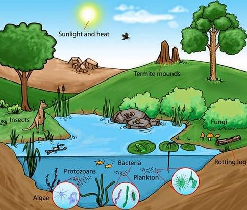 Ciri – ciri dari Ekosistem air tawar