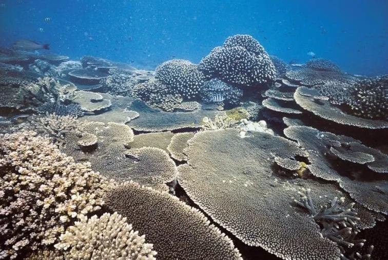 Manfaat terumbu karang dilihat dari fungsi sosial