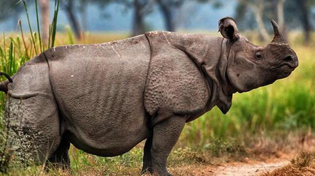 Hewan langka Badak sumatera dan badak jawa