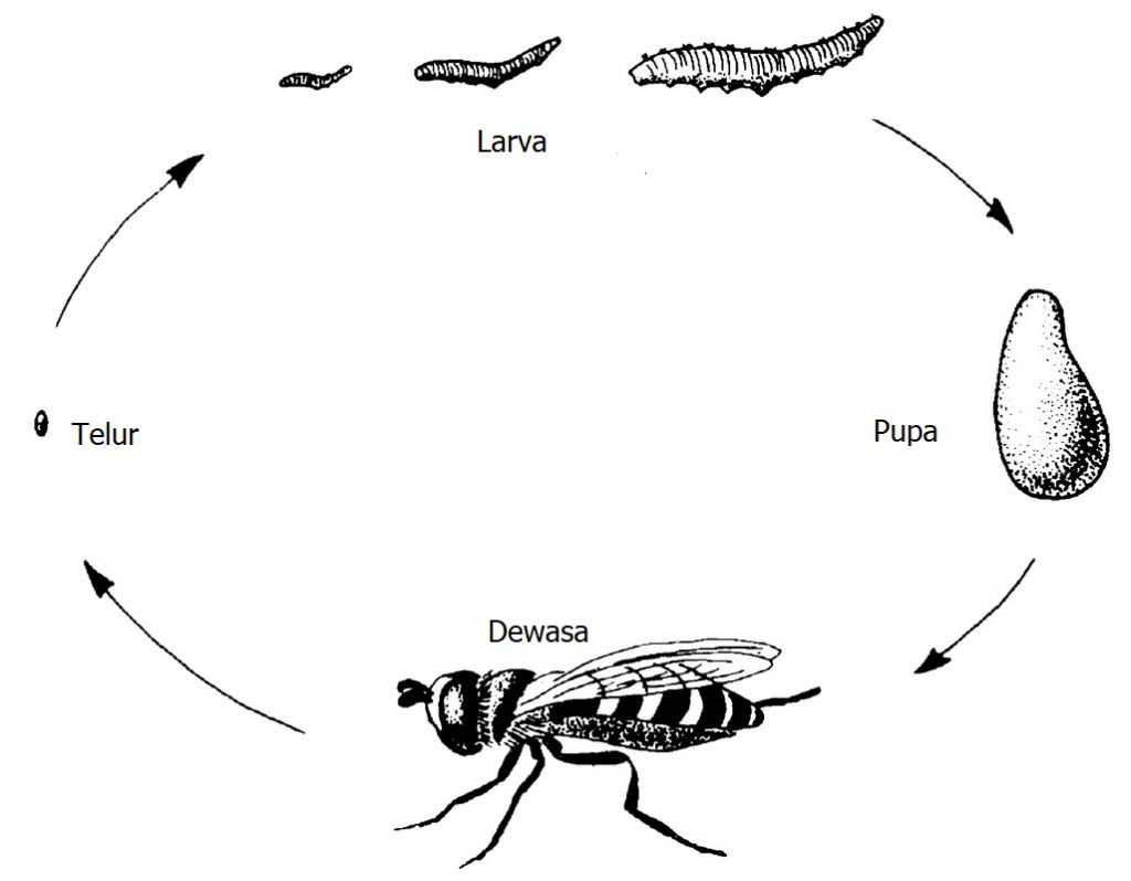 Daur Hidup Hewan Lebah